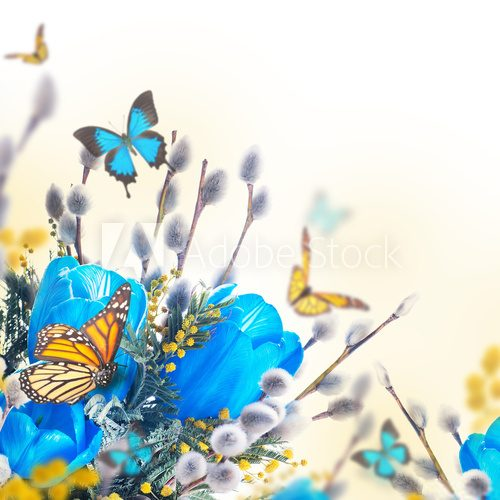 Fototapeta Blue tulips with mimosa and butterfly, spring background
