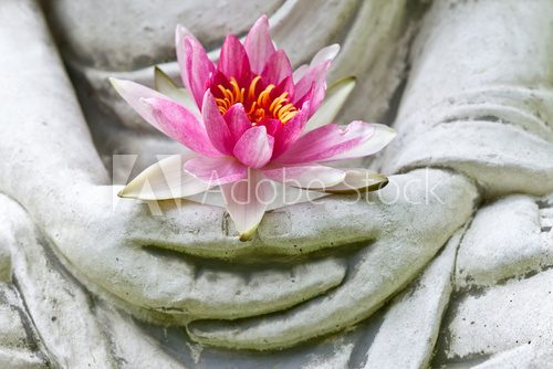 Fototapeta Buddha hands holding flower, close up