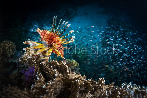 Fototapeta Fish with coral reef