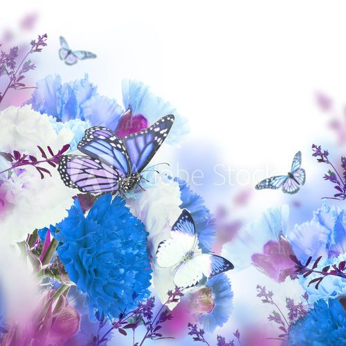 Fototapeta Floral background of roses and butterfly, wild flowers