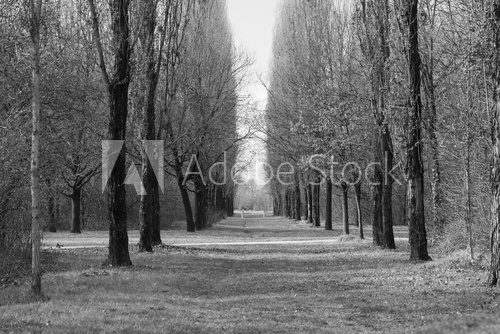 Fototapeta Milan (Italy): Parco Nord at winter