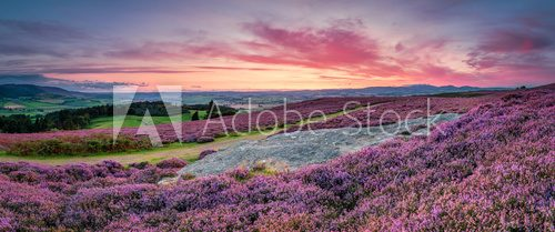 Fototapeta Panorama at Twilight over Rothbury Heather, on the terraces, which walk offers views over the Coquet Valley to the Simonside and Cheviot Hills, heather covers the hillside in summer