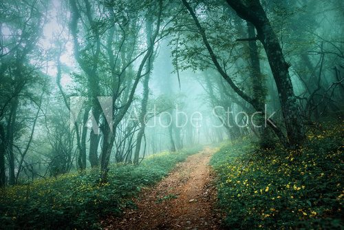 Fototapeta Road through a mysterious dark forest in fog with green leaves a