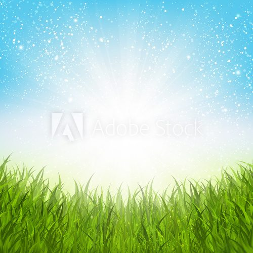 Fototapeta Sunny summer meadow for Your design