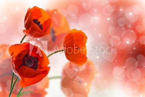 Fototapeta Three red poppies