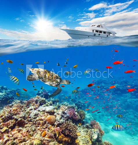 Fototapeta Underwater coral reef with horizon and water surface